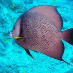 Nassau, Bahamy 42szkoła nurkowania kraków