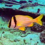 Nassau, Bahamy 46szkoła nurkowania kraków