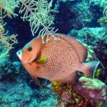 Nassau, Bahamy 47szkoła nurkowania kraków