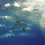 Nassau, Bahamy 60szkoła nurkowania kraków