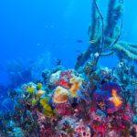 Nassau, Bahamy 63szkoła nurkowania kraków