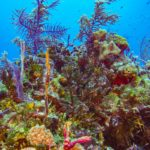 Nassau, Bahamy 66szkoła nurkowania kraków