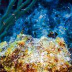 Nassau, Bahamy 67szkoła nurkowania kraków