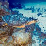 Nassau, Bahamy 68szkoła nurkowania kraków