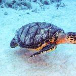 Nassau, Bahamy 69szkoła nurkowania kraków