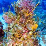 Nassau, Bahamy 70szkoła nurkowania kraków