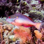 Nassau, Bahamy 72szkoła nurkowania kraków