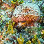 Nassau, Bahamy 75szkoła nurkowania kraków