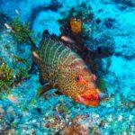 Nassau, Bahamy 77szkoła nurkowania kraków