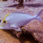 Nassau, Bahamy 80szkoła nurkowania kraków