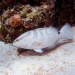 Nassau, Bahamy 105szkoła nurkowania kraków
