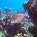 Nassau, Bahamy 107szkoła nurkowania kraków