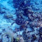 Nassau, Bahamy 111szkoła nurkowania kraków