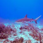 Nassau, Bahamy 117szkoła nurkowania kraków