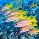 Nassau, Bahamy 118szkoła nurkowania kraków