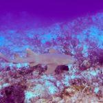 Nassau, Bahamy 119szkoła nurkowania kraków