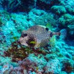 Nassau, Bahamy 121szkoła nurkowania kraków