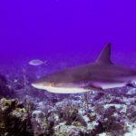 Nassau, Bahamy 126szkoła nurkowania kraków