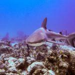 Nassau, Bahamy 129szkoła nurkowania kraków