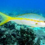 Nassau, Bahamy 132szkoła nurkowania kraków