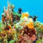 Nassau, Bahamy 134szkoła nurkowania kraków