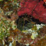 Nassau, Bahamy 135szkoła nurkowania kraków
