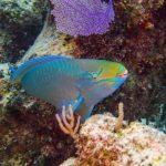 Nassau, Bahamy 137szkoła nurkowania kraków