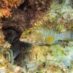 Nassau, Bahamy 138szkoła nurkowania kraków