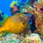 Nassau, Bahamy 145szkoła nurkowania kraków