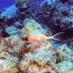 Nassau, Bahamy 146szkoła nurkowania kraków
