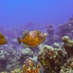 Nassau, Bahamy 147szkoła nurkowania kraków