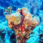 Nassau, Bahamy 151szkoła nurkowania kraków