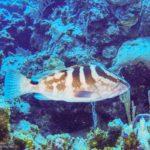 Nassau, Bahamy 152szkoła nurkowania kraków