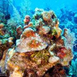 Nassau, Bahamy 153szkoła nurkowania kraków