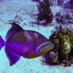 Nassau, Bahamy 155szkoła nurkowania kraków