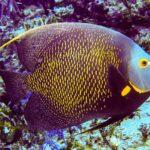 Nassau, Bahamy 158szkoła nurkowania kraków