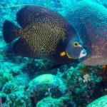 Nassau, Bahamy 159szkoła nurkowania kraków