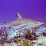Nassau, Bahamy 161szkoła nurkowania kraków
