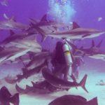 Nassau, Bahamy 165szkoła nurkowania kraków