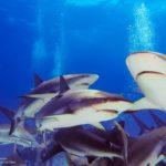 Nassau, Bahamy 175szkoła nurkowania kraków