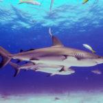 Nassau, Bahamy 184szkoła nurkowania kraków