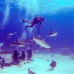 Nassau, Bahamy 186szkoła nurkowania kraków