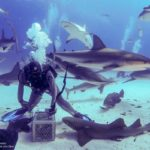 Nassau, Bahamy 187szkoła nurkowania kraków