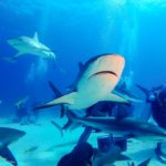 Nassau, Bahamy 189szkoła nurkowania kraków