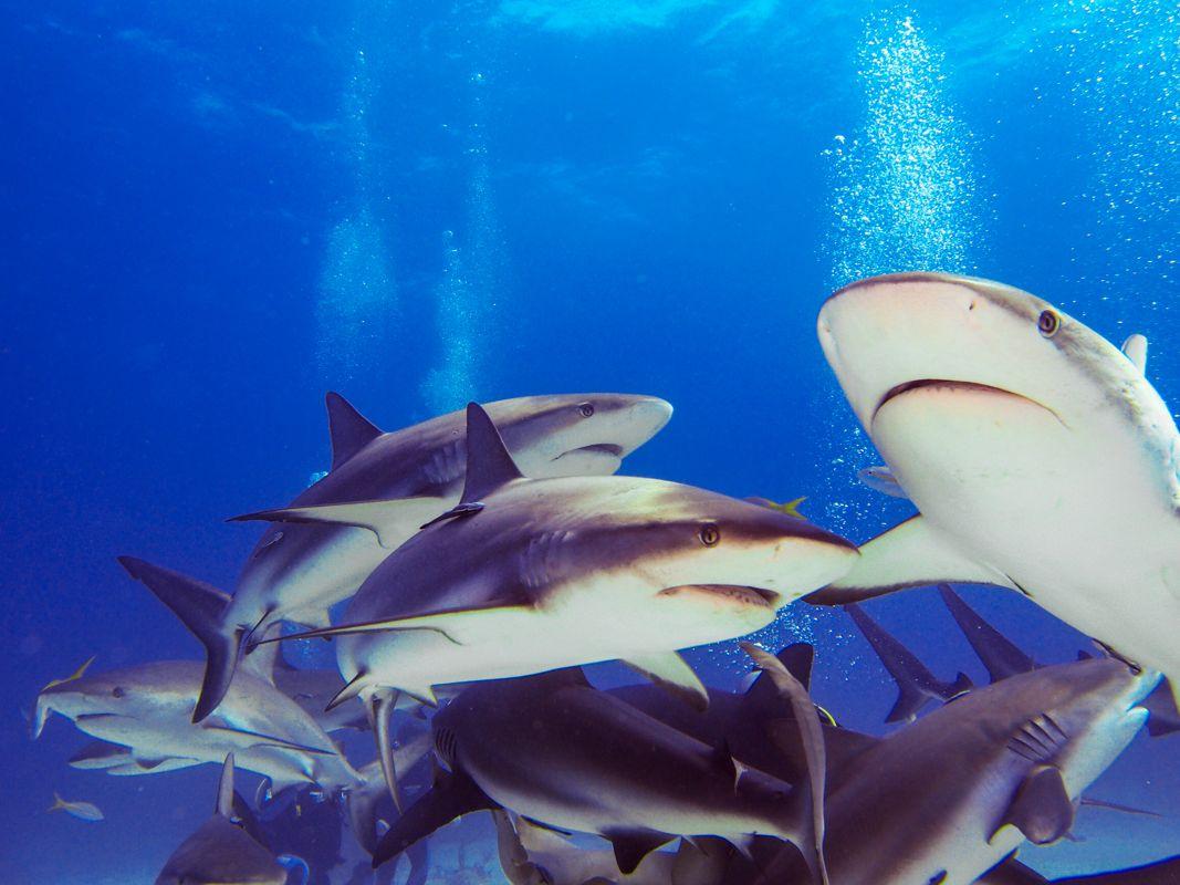 Miejsca w których zanurkowaliśmy na Bahamach 12szkoła nurkowania kraków