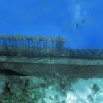 Nassau, Bahamy 198szkoła nurkowania kraków