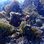 Marsa Alam 102szkoła nurkowania kraków