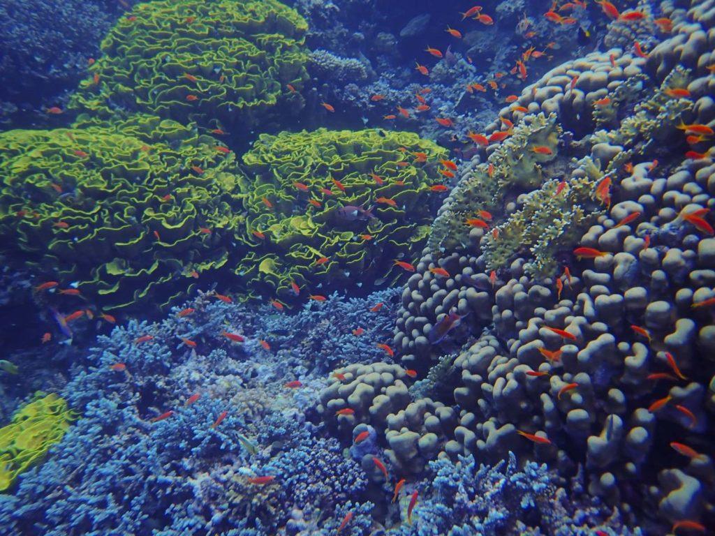 Nurkowanie na rafach koralowych w Marsa Alam