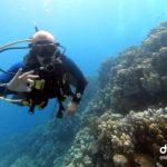 Marsa Alam 110szkoła nurkowania kraków