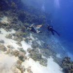 Marsa Alam 122szkoła nurkowania kraków